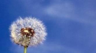 La alergia sus síntomas y como prevenirlos